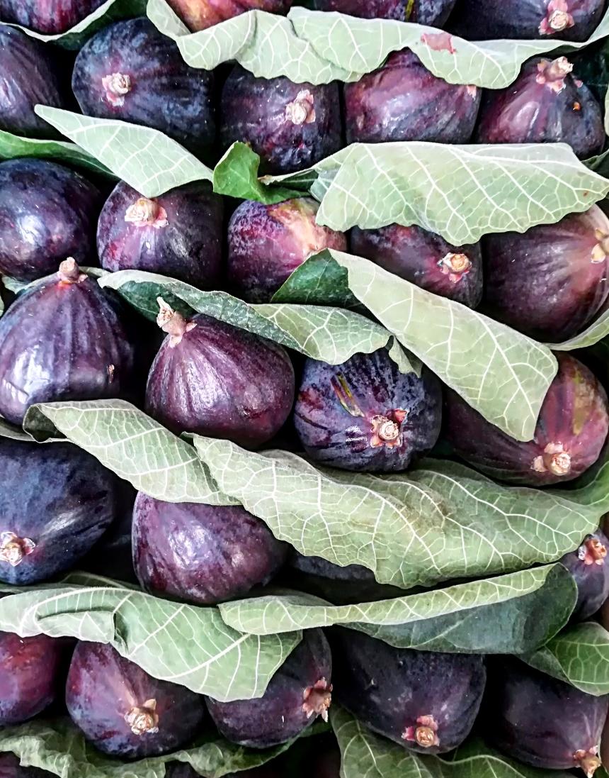fioroni figs