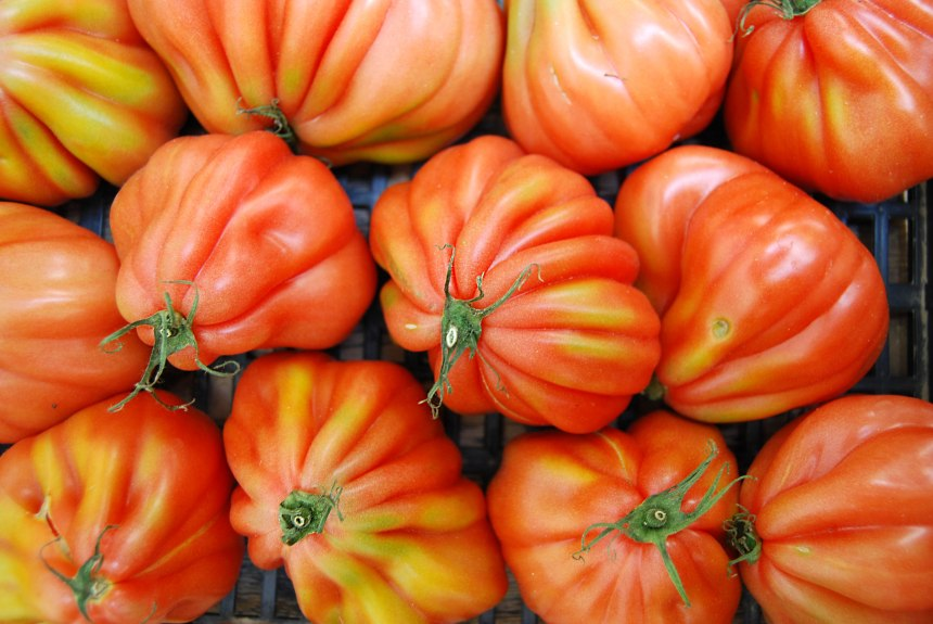tomatoes - cuore di bue 2 web