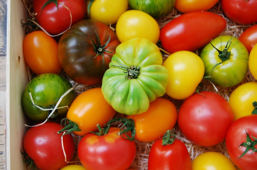 tomatoes - heirloom 2018 web