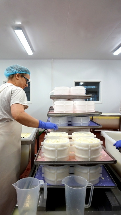 Ladling curds into moulds
